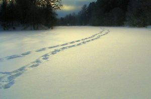 Pėdos sniege